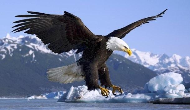 پرنده-شکاری-1